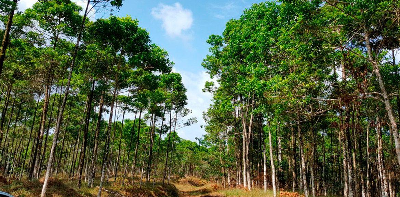 Empresa productora de tarimas de madera comprometida con el ambiente