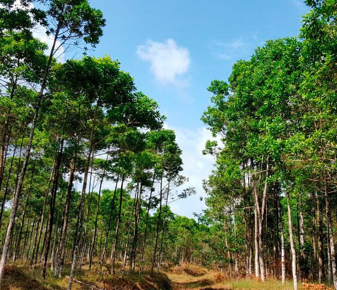 Empresa con compromiso ambiental en Costa Rica