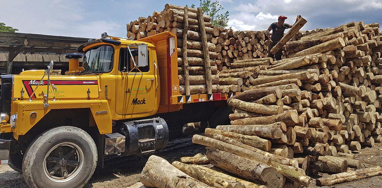 Profesionales en al construcción de tarimas de madera en Costa Rica
